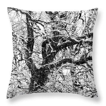 Snowy Oak Throw Pillow