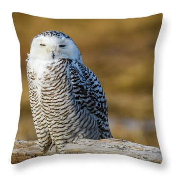 Throw Pillow featuring the photograph Snowy On Log by Michael Hubley