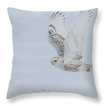 Snowy Owl #3/3 Throw Pillow by Patti Deters