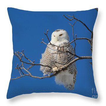 Snowy Owl 7 Throw Pillow