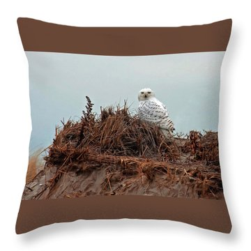 Snowy Owl In Dunes Throw Pillow