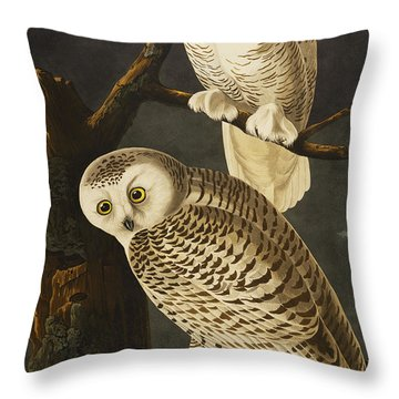 Snowy Owl Throw Pillow by John James Audubon