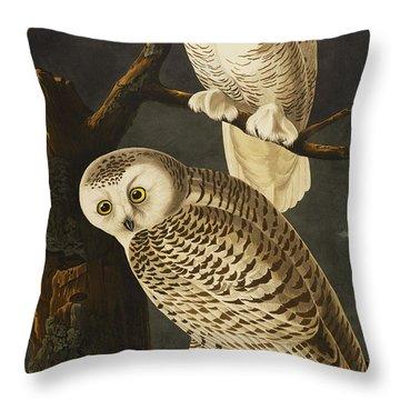 Designs Similar to Snowy Owl by John James Audubon