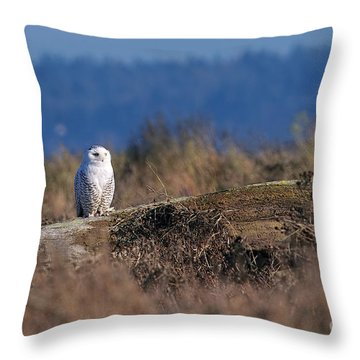Throw Pillow featuring the photograph Snowy Owl On Log by Sharon Talson