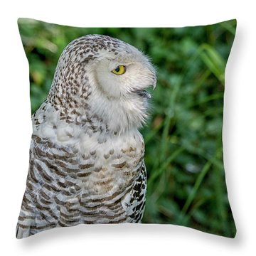 Throw Pillow featuring the photograph Snowy Owl by Patricia Hofmeester