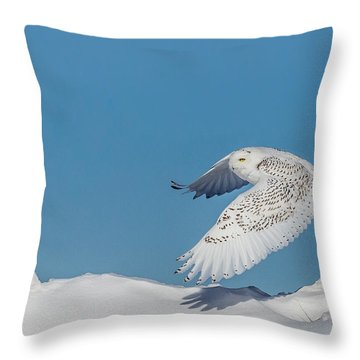 Snowy Owl - Taking Flighty Throw Pillow