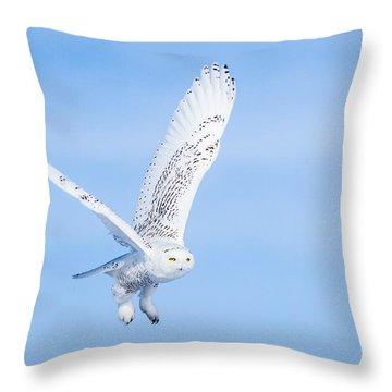 Snowy Owls Soaring Throw Pillow