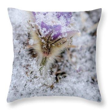 Snowy Pasqueflower Morning Throw Pillow