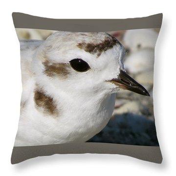 Snowy Plover Close Up Throw Pillow by Melinda Saminski