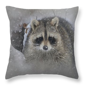 Snowy Raccoon Throw Pillow