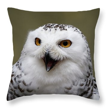 Throw Pillow featuring the photograph Snowy Sings by Michael Hubley