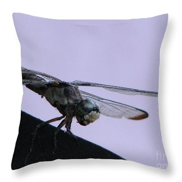 So Many Bugs So Little Time Throw Pillow