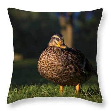 Throw Pillow featuring the photograph Soak Up The Sun by Mark Papke