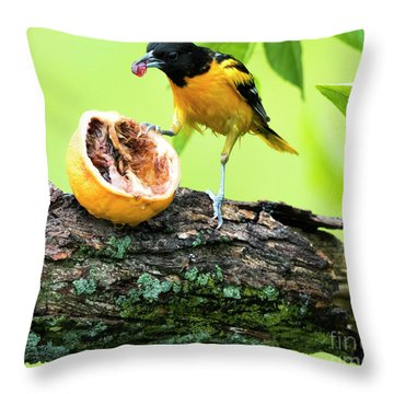 Soaking Wet Baltimore Oriole At The Feeder Throw Pillow