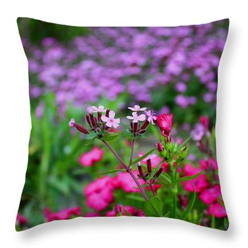 Throw Pillow featuring the photograph Soapwort And Pinks by Kathryn Meyer