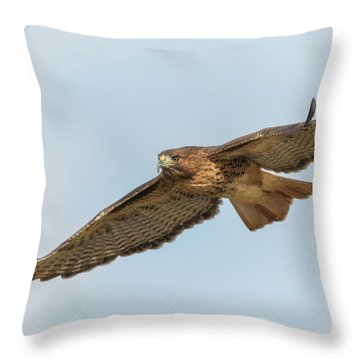 Throw Pillow featuring the photograph Soaring Hawk 2 by Angie Vogel