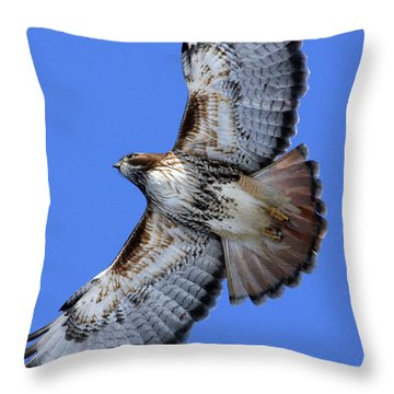 Soaring Red-tail Throw Pillow
