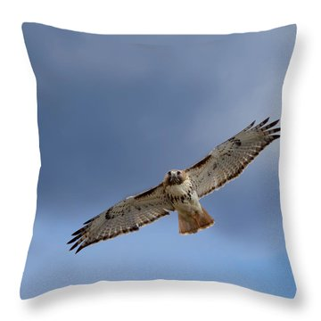 Soaring Red Tail Square Throw Pillow by Bill Wakeley