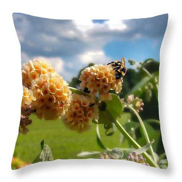 Throw Pillow featuring the photograph Sobaso by Isabella F Abbie Shores FRSA
