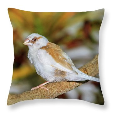 Throw Pillow featuring the photograph Society Finch At The Key West Butterfly And Nature Conservatory by Bob Slitzan