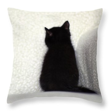 Throw Pillow featuring the photograph Sitting Kitty by Amy Tyler