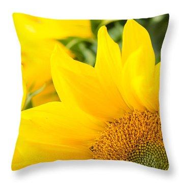 Soft Sunflowers Throw Pillow