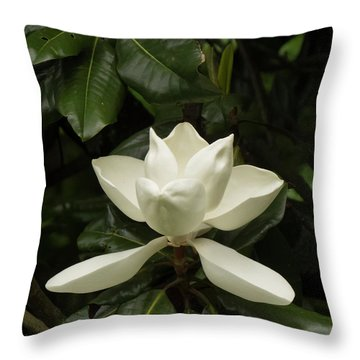 Softly Dreaming Throw Pillow