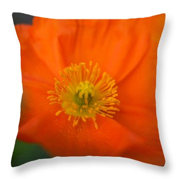Softly Poppies Throw Pillow by Kathy Yates