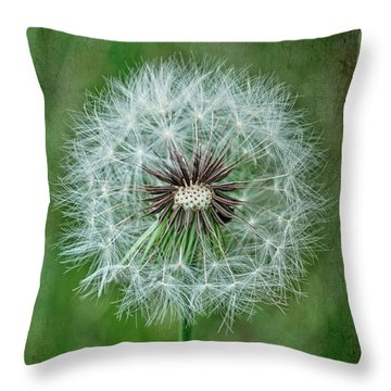 Throw Pillow featuring the photograph Softly Sitting by Jan Amiss Photography