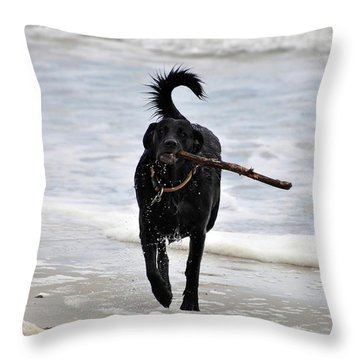 Soggy Stick Throw Pillow by Al Powell Photography USA