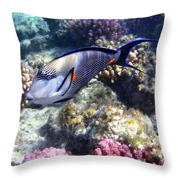 Sohal Surgeonfish 5 Throw Pillow