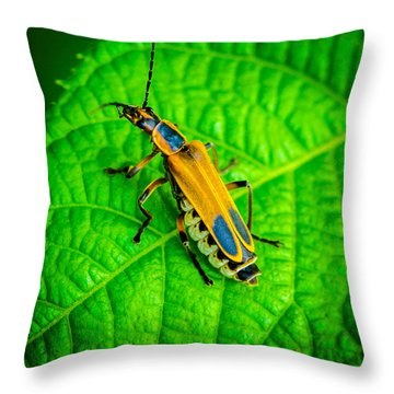 Soldier Beatle Macro Throw Pillow by Bruce Pritchett
