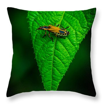 Soldier Beetle Throw Pillow by Bruce Pritchett
