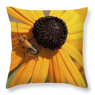 Soldier Beetle On His Flower Throw Pillow