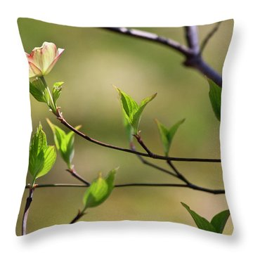 Solitary Dogwood Bloom Throw Pillow by Teresa Mucha