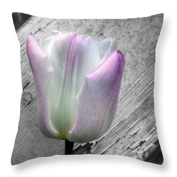 Solitary Pink Whisper Tulip Throw Pillow