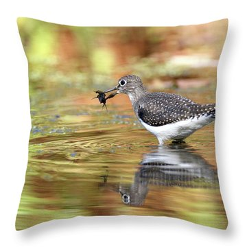 Solitary Sandpiper With Belostomatide Throw Pillow