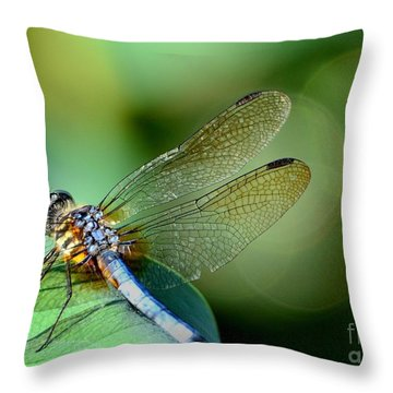 Solitude Throw Pillow by Chad and Stacey Hall