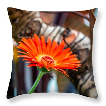 Solo Tangerine Dream Throw Pillow