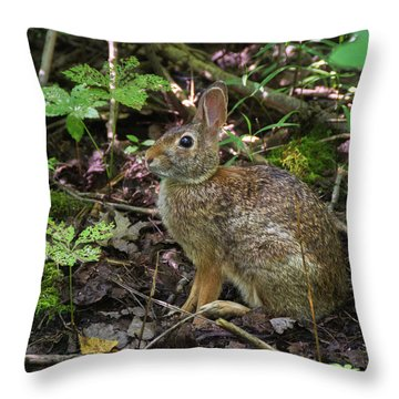 Throw Pillow featuring the photograph Some Bunny Stopped By by Bill Pevlor