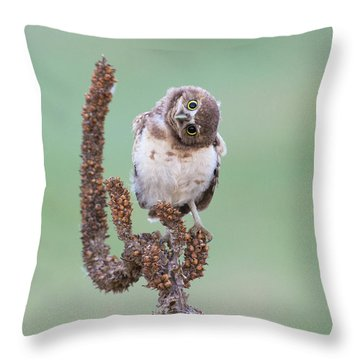Some Days I Can't Tell Which Way Is Up Throw Pillow