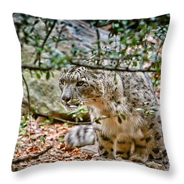 Something Got His Attention Throw Pillow by Karol Livote