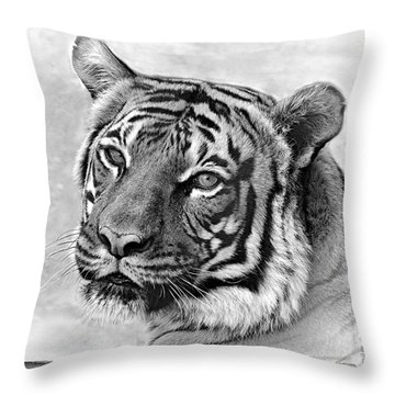 Sometimes Less Is More Throw Pillow