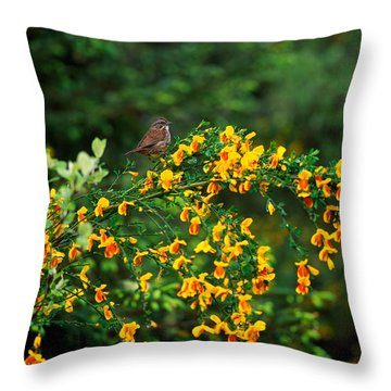 Song Sparrow Bird On Blooming Scotch Throw Pillow by Panoramic Images