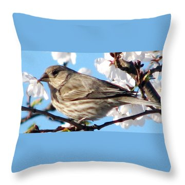 Song Sparrow Dining Out Throw Pillow by Angela Davies