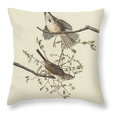 Song Sparrow Throw Pillow by Rob Dreyer