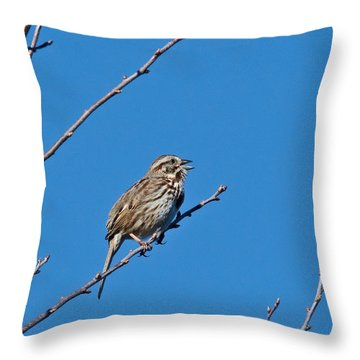Song Sparrow Throw Pillow by Michael Peychich