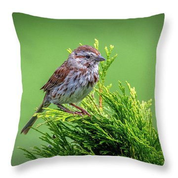 Song Sparrow Perched - Melospiza Melodia Throw Pillow