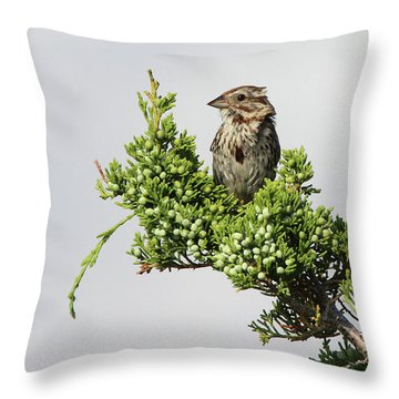 Song Sparrow Port Jefferson New York Throw Pillow