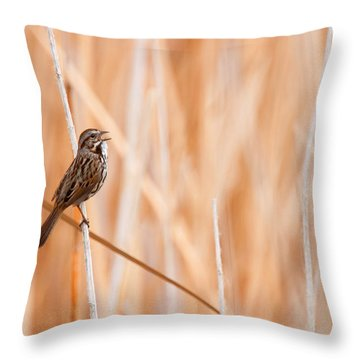 Song Sparrow Throw Pillow